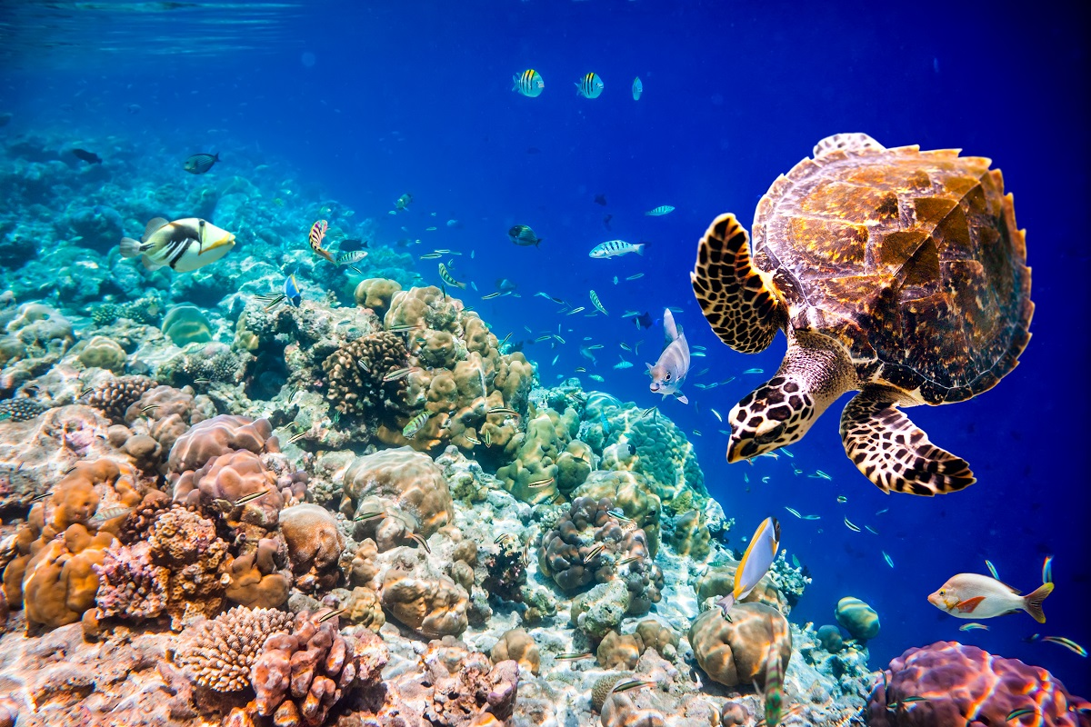 Coral reefs and their inhabitants