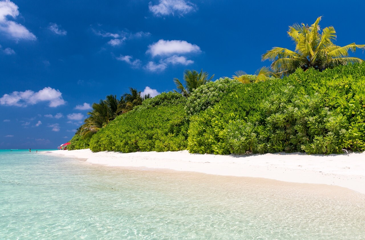 Thoddoo Island in the Maldives: everything about rest, prices, locations