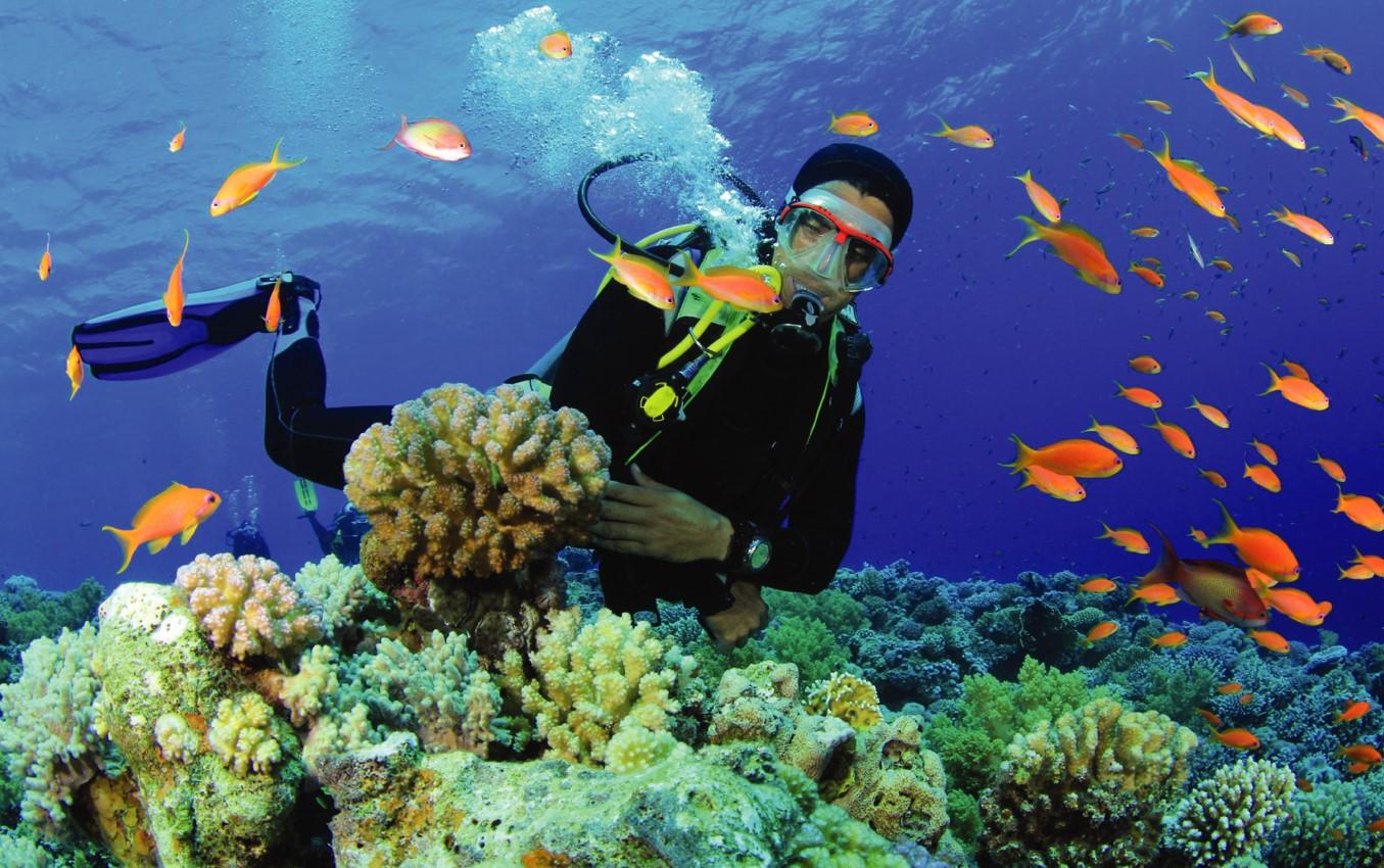 Дайвинг на Маврикии: все, что нужно знать